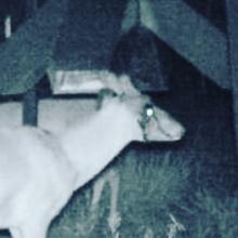 """Is this deer a """"White Walker""""? —————————————— #deerhunting #gameofthrones"""